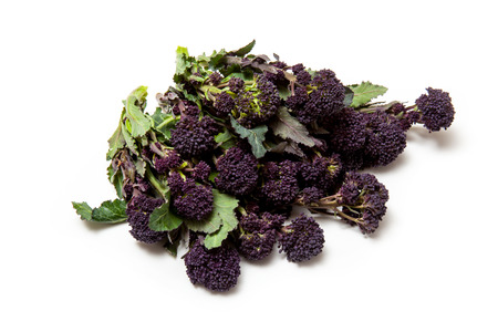 Purple sprouting broccoli isolated on a white studio background.