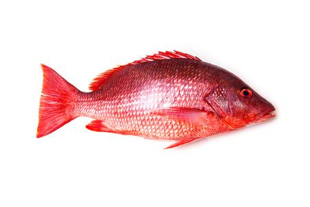 Norte pargo rojo Lutjanus campechanusfish aislado en un fondo blanco. Foto de archivo - 44195027