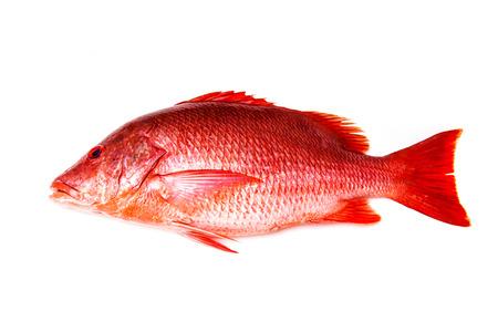 Norte pargo rojo Lutjanus campechanusfish aislado en un fondo blanco. Foto de archivo - 44195049