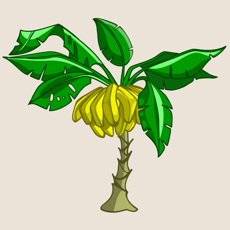 cartoon banana tree with bananas