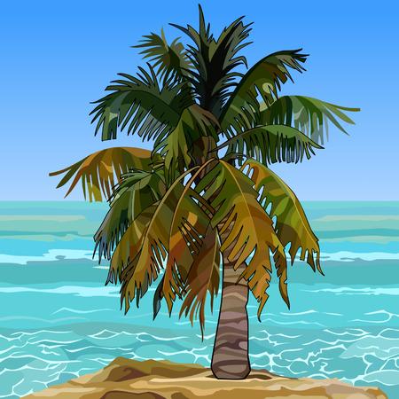 Einsame Pelzpalme am Ufer des azurblauen Meeres Standard-Bild - 88793472