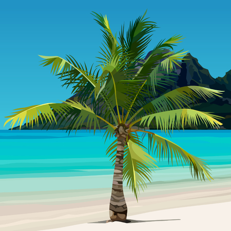 palm growing on tropical coast with the blue water