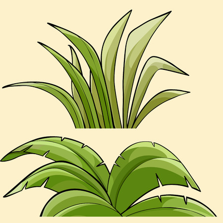 Two different green tropical plants bushes Illustration