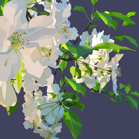 Branch of a blossoming apple tree on a blue background. Illustration