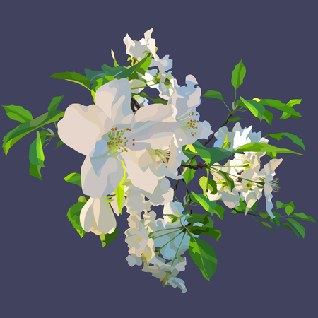 Painted white flowers of a blossoming apple tree.