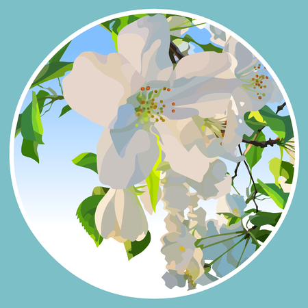 White flowers of a blossoming apple tree in a circle.