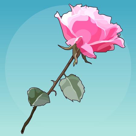 Flower beautiful pink rose on blue background. Illustration