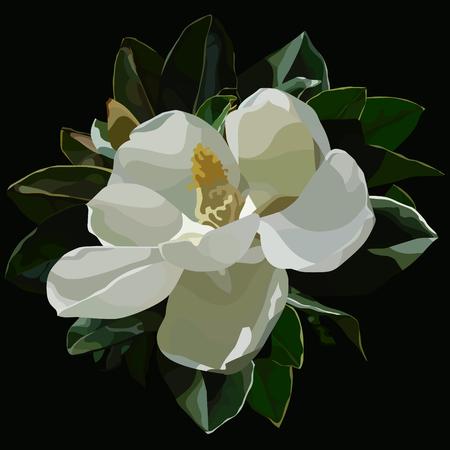 geschilderde grote tot bloei gekomen witte magnoliabloem op zwarte achtergrond