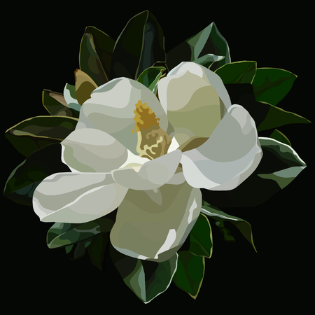 painted large blossomed white magnolia flower on black background