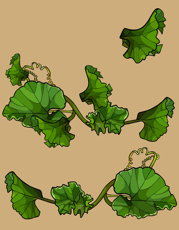 set of separately beautifully drawn green leaves crawling tops of watermelon 일러스트