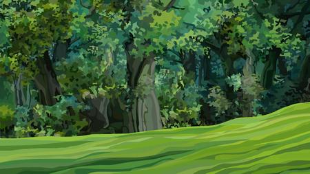 cartone animato fitta foresta decidua verde con radura Vettoriali
