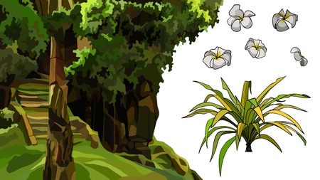 Satz von Elementen, die mit Steinstruktur mit Moos und tropischen Pflanzen bewachsen sind