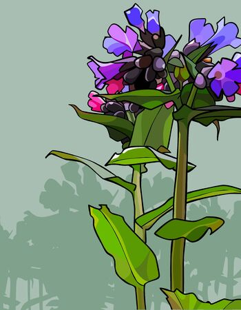 painted flowers Lungwort on simple background Ilustrace