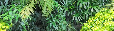 Panoramic background of dense green vegetation in the jungle. Vector image