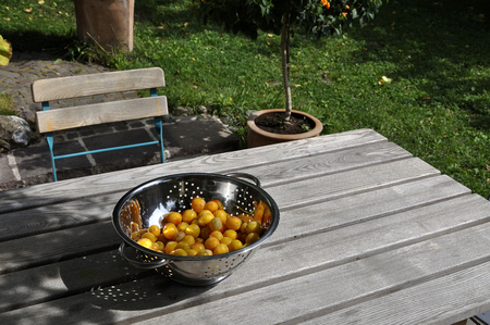 Germany,Baden Wuerttemberg,Yellow plums in colander on wooden table