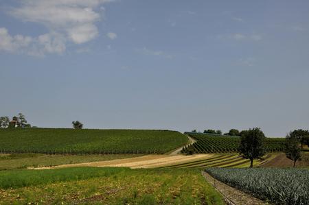 location shot: Germany,Baden Wuerttemberg,View of vineyards