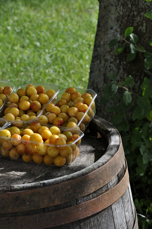 Germany,Baden Wuerttemberg,Yellow plums in plastic boxes on barrel