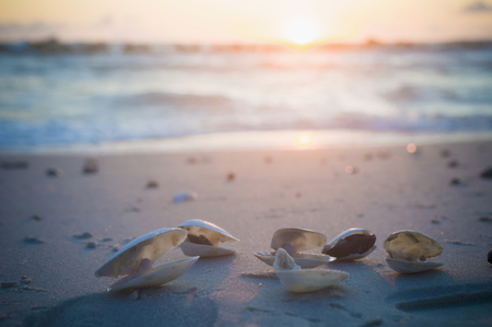 Germany,Mecklenburg Western Pomerania,Shells at Baltic Sea during sunrise LANG_EVOIMAGES