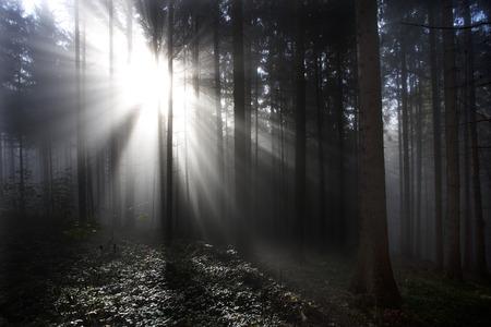 location shot: Austria, Mondsee, trees at backlight LANG_EVOIMAGES