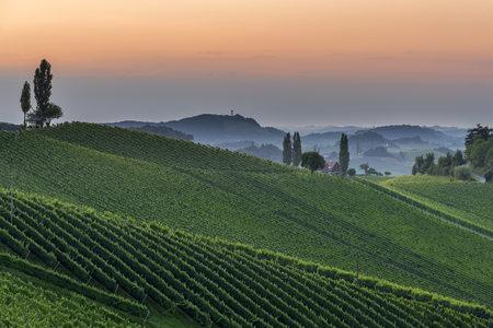 steiermark: Austria, Styria, vine route, vineyard at sunset