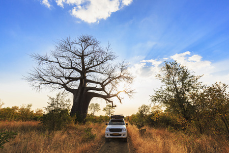 Zimbabwe, Masvingo, Gonarezhou National Park, off-road vehicle parking under a baobab
