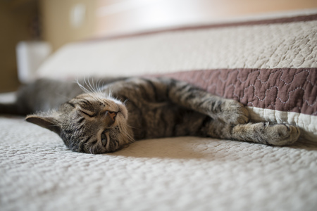 Tabby cat relaxing on bed