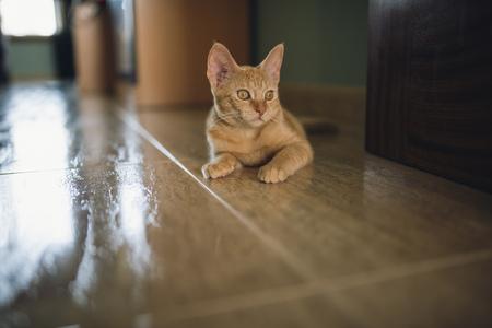 Portrait of kitten lying on the floor LANG_EVOIMAGES