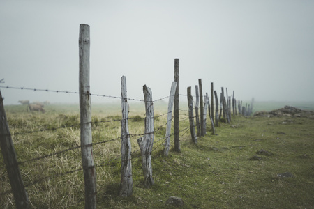 barbed wire fence: Spain, Ortigueira, pasture with fence on a foggy day