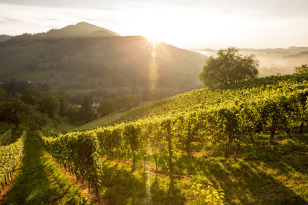 Austria, Styria, Leutschach, vineyards at wine route