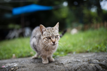 Tabby cat in a garden LANG_EVOIMAGES