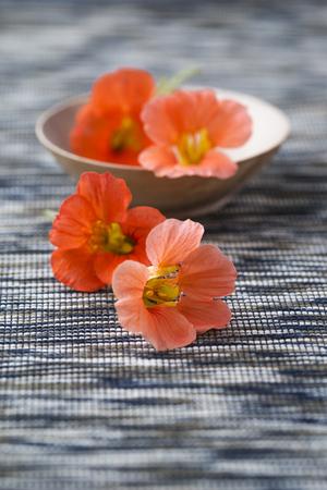 marmorate: Blossoms of nasturtium, edible