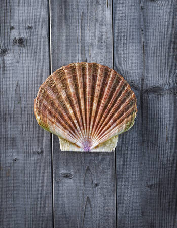 interiour shots: Scallop on wood LANG_EVOIMAGES