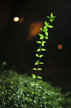 Plant seeking the light LANG_EVOIMAGES