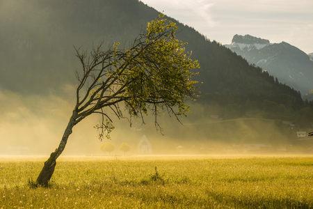 tranquillity: Germany, Oberstdorf, single bent beech on a hazy meadow