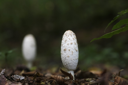 Germany, white mushroom in the woods LANG_EVOIMAGES