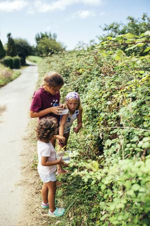 Three girls picking blackberries