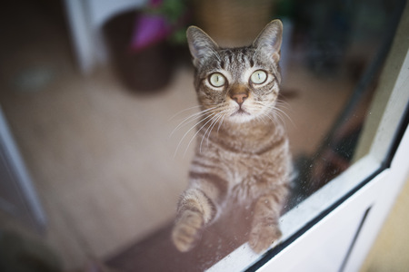 Tabby cat looking up through a window