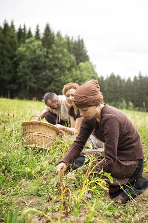 Three people harvesting potatoes by hand