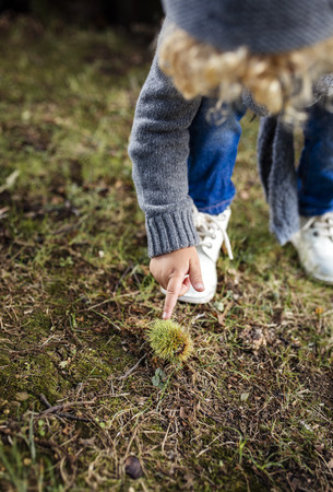 Little boy pointing on sweet chestnut lying on a meadow LANG_EVOIMAGES