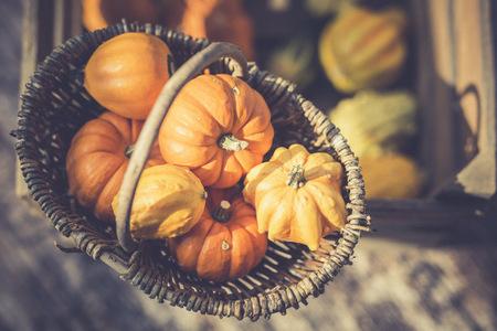 Wickerbasket of decorative gourds