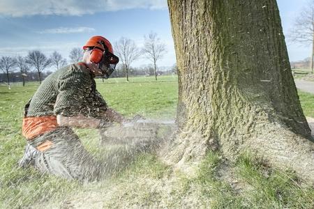 cowering: Lumberjack felling tree