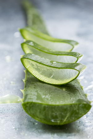 Sliced stem of Aloe Vera