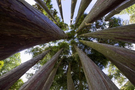 Ireland, National Park, Group of trees, low angle view