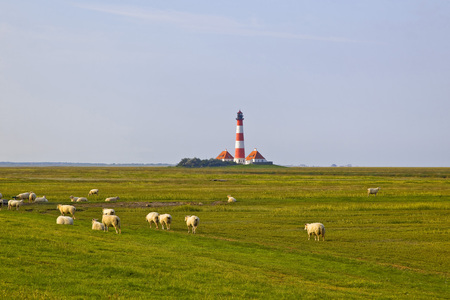 Germany, North Frisia, Westerhever, Westerheversand Lighthouse, sheep on meadow