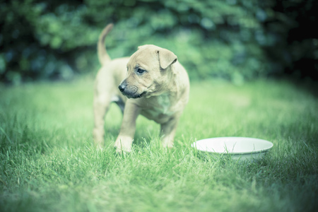 Puppy with drinking bowl on a meadow