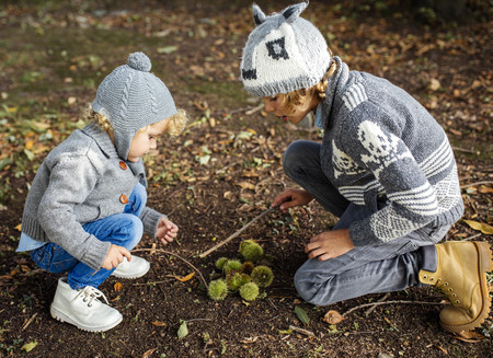 Two boys with collected sweet chestnuts