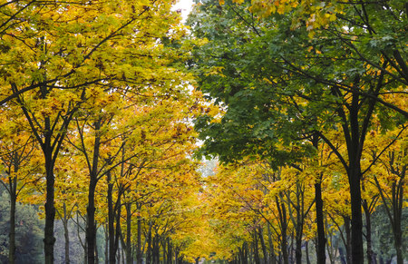 Germany, Saxony, avenue in autumn LANG_EVOIMAGES