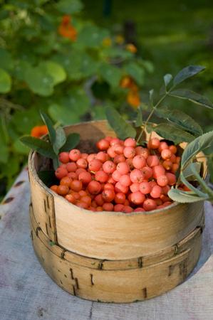 Rowanberries in basket