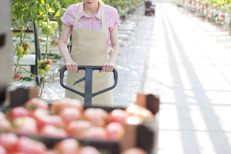 Woman transporting harvested tomatoes with pallet jack in greenhouse