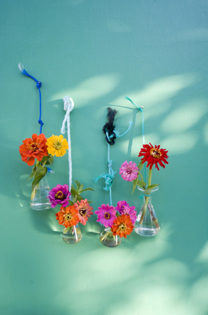 Laboratory glassware with common zinnia fixed with cords hanging on a wall